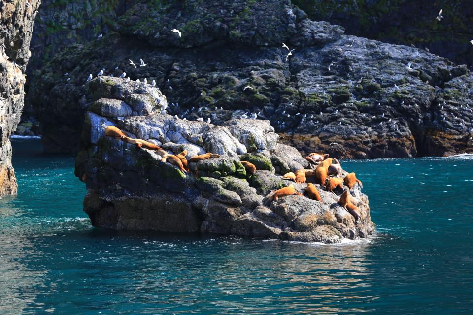 Sea lions enjoying the sun