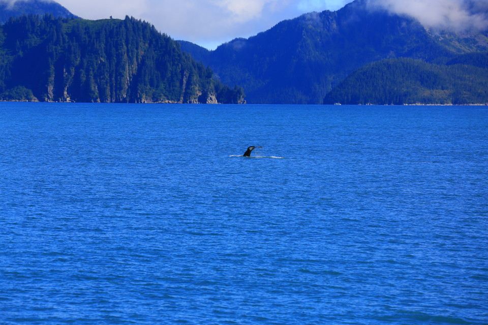 We saw a few huge Humpback whales, they are spectacular creatures