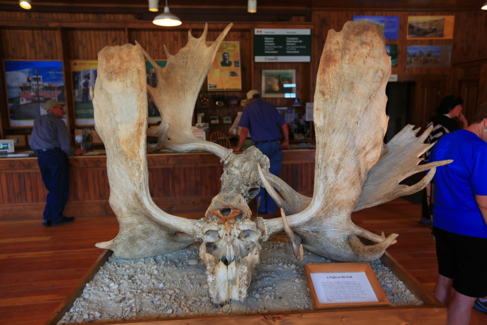 We saw these locked moose horns in the visitor center.