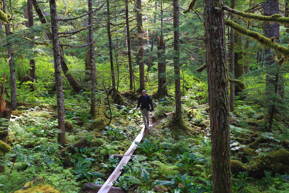 Sam walking on one of the many mini bridges on the Seduction Point trail in Haines.