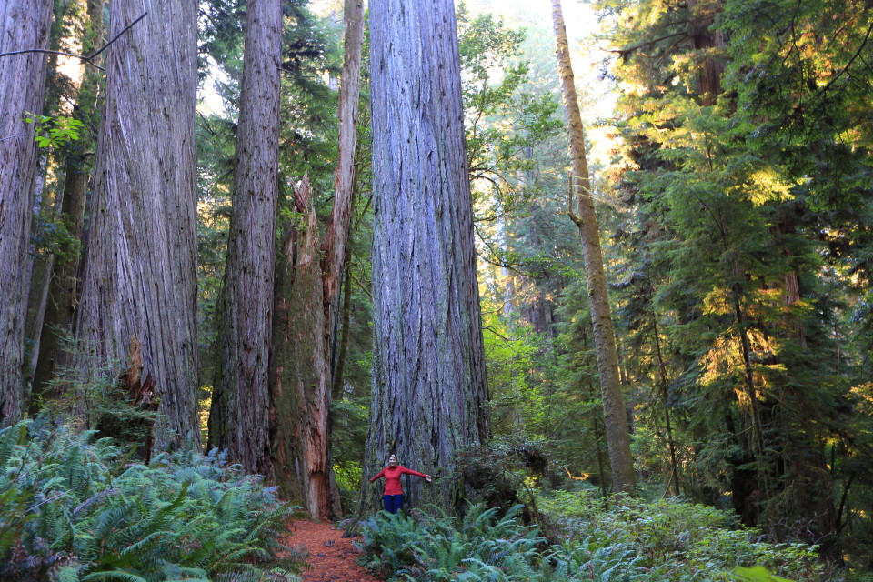 The old growth forests trees were HUGE!
