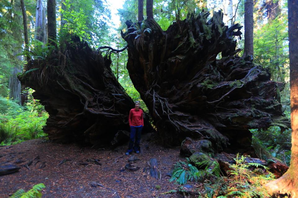 HUGE root.