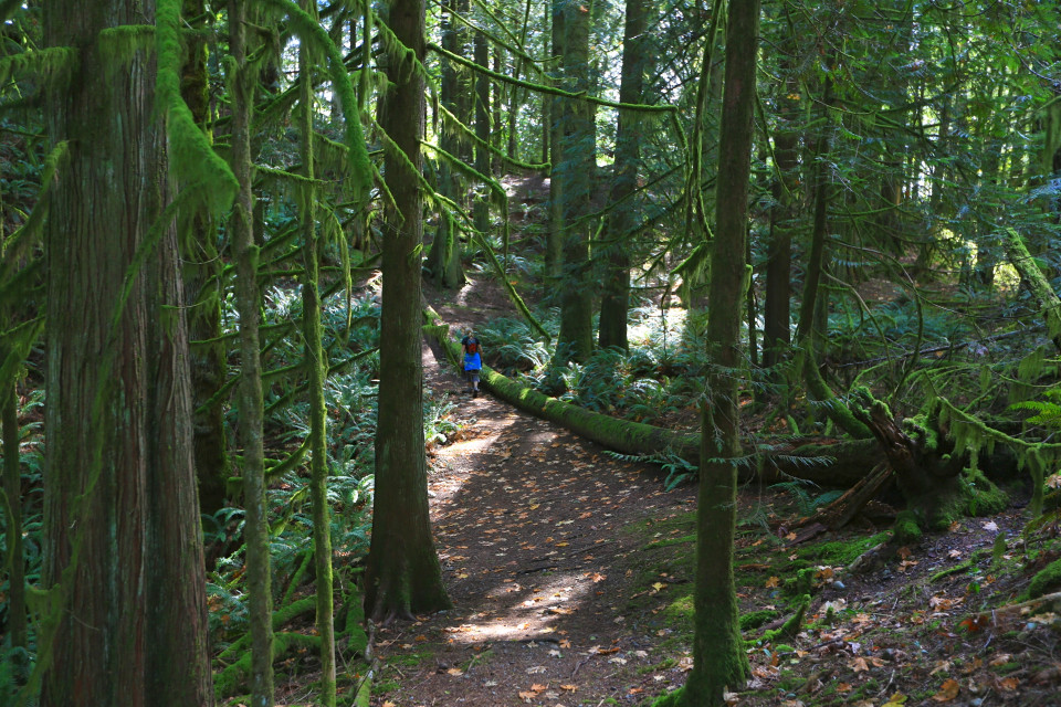 Hiking the Juan de Fuca trails begins with long stretches through rain forest.