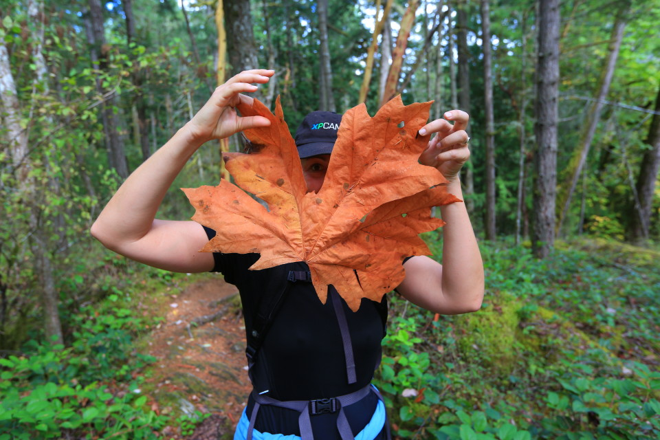 Maple leaf found on our hike near the Goldstream park.