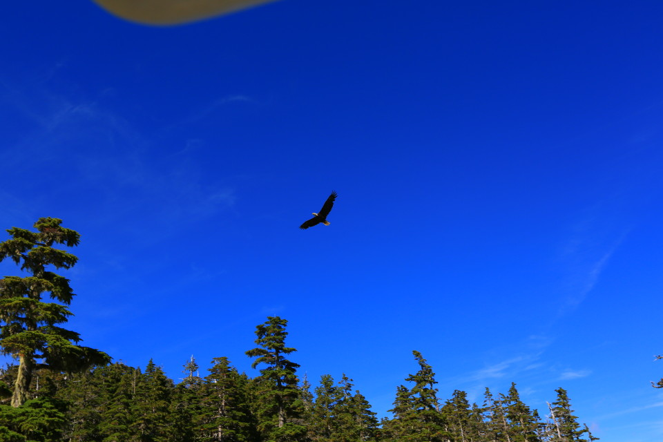 There were so many eagles flying around, you can see the corner of the XP in this one. They were HUGE and cast shadows so big it looked like a plane flying over you when they were close.