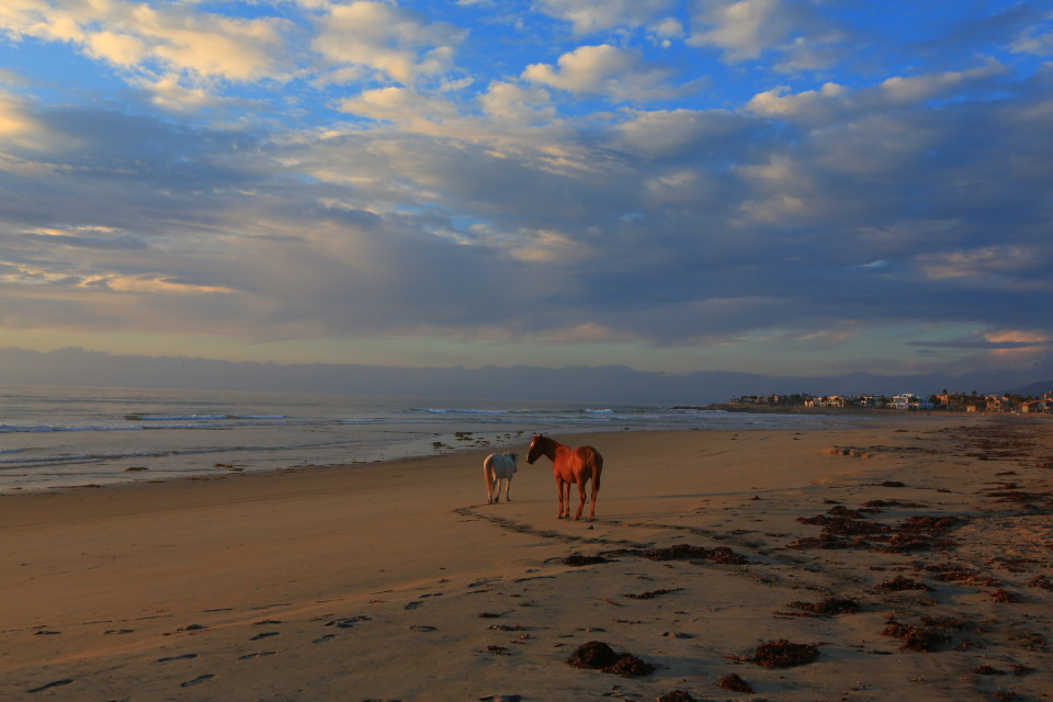 When the only other things on the beach are wild horses, you know you are in Mexico.