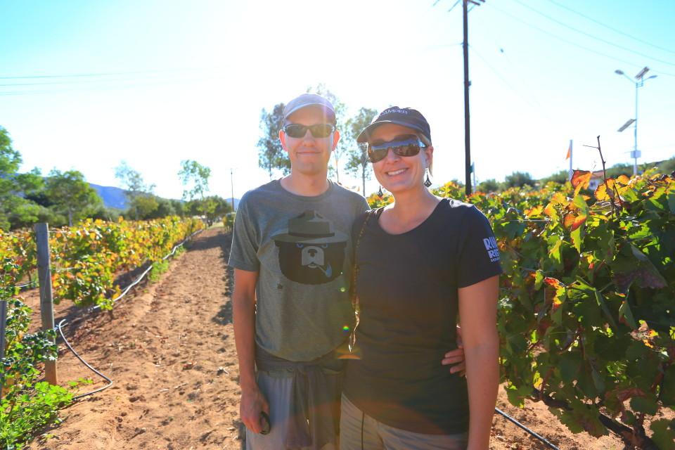 Vineyards in the desert.
