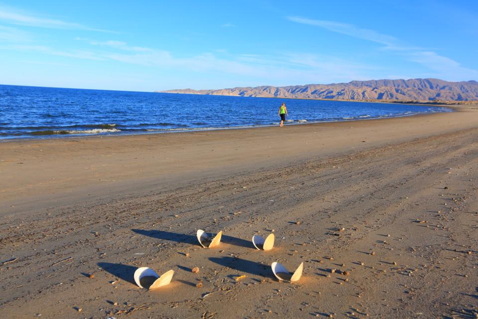 We enjoyed several long walks on the beach.