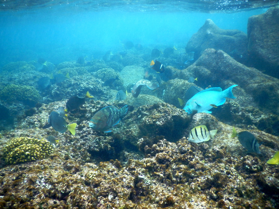 More fish around the coral reef.