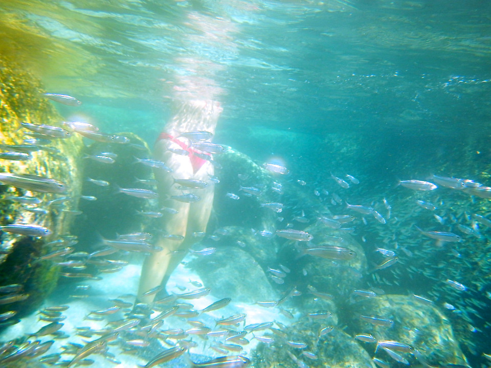 You never know what is under the water! I jumped in having no idea that there were all these fish swimming around me.