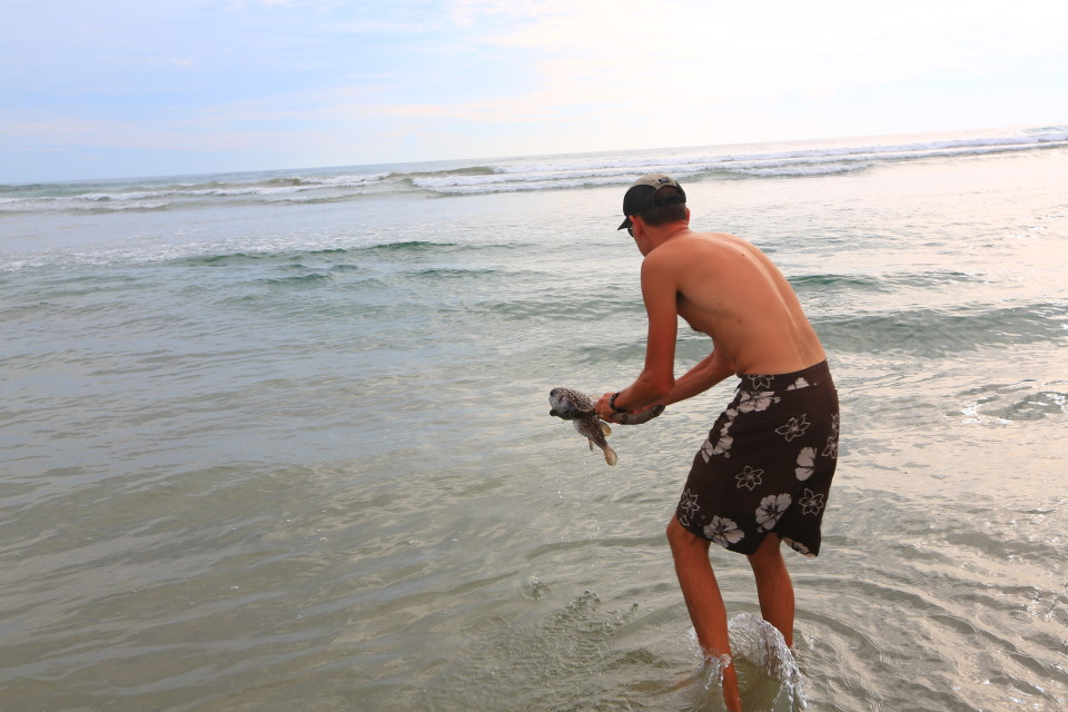 We found this giant puffer fish stranded on the beach by the tide. It was still alive so I made Sam save it for me. He did and when it swam away all puffed up we were so happy!
