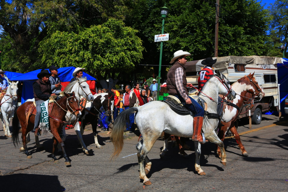 Rodeo traffic jam.