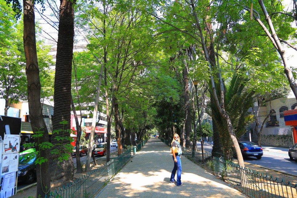 Walking on the shady tree lined streets of Condesa.