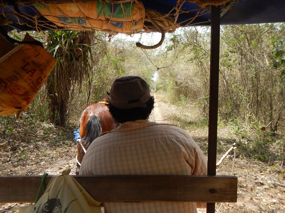 Riding along on the horse drawn carriage to our next cenote.