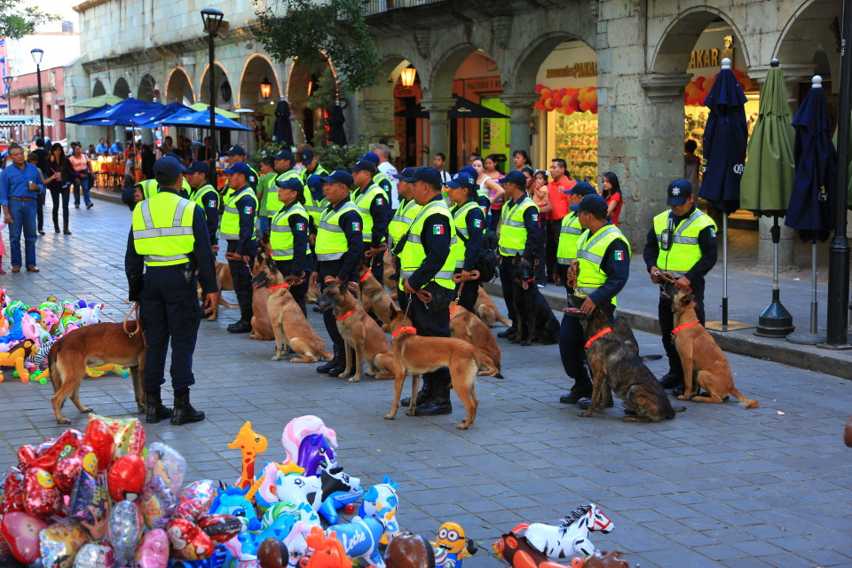 Police dogs getting trained in the Zocalo.