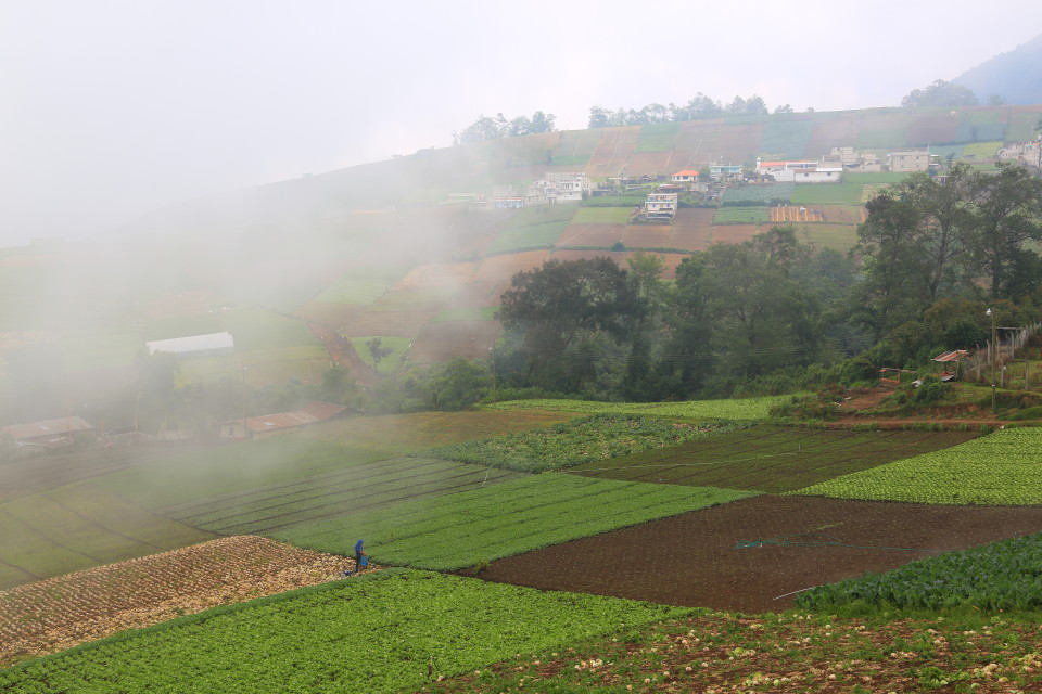 The hills all around the volcano are terraced with vegetable fields.