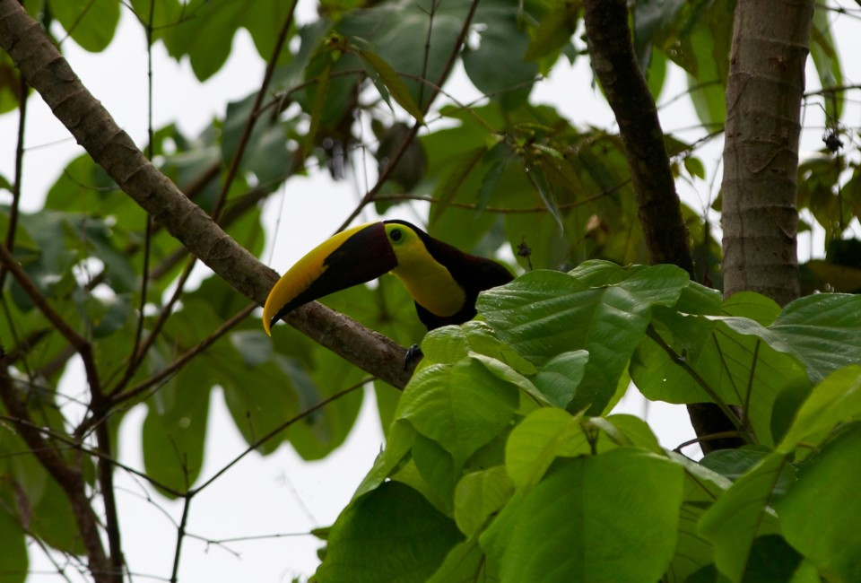 There were toucans in the trees outside their house. We loved seeing them fly by, the beaks look crazy during flight.