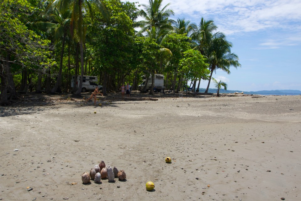 I found I preferred the smaller brown coconuts for my ball. They were lighter and I could throw is farther.