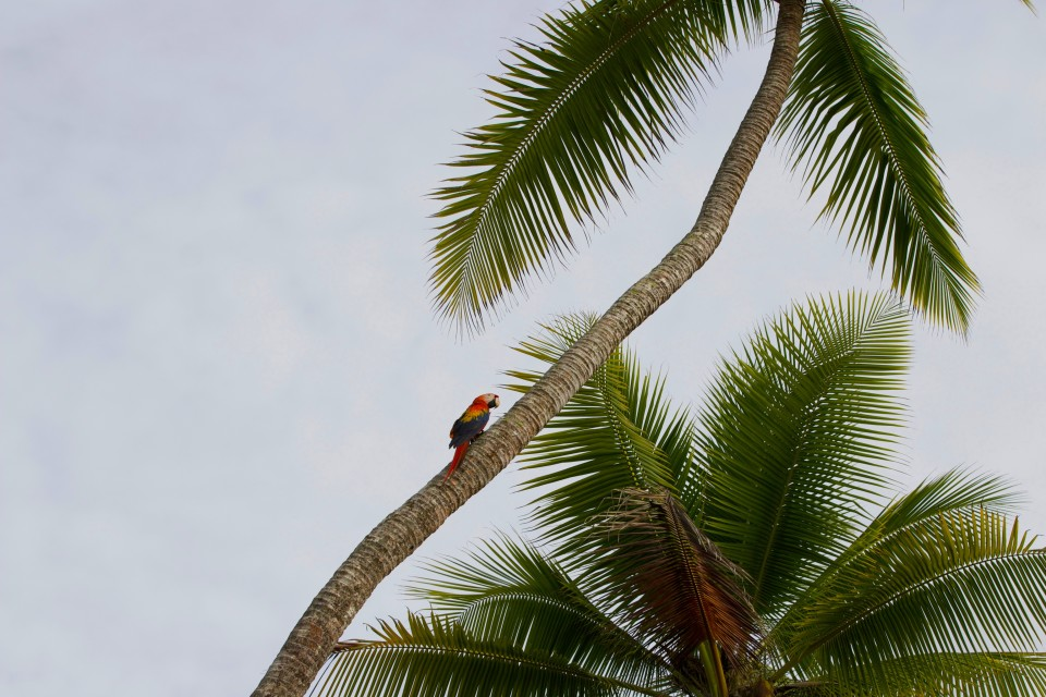 Scarlet Macaws were everywhere, landing on nearby trees to eat and check-out the XPCamper.
