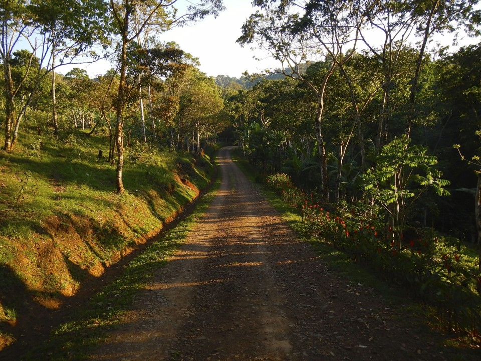 The road into the finca.