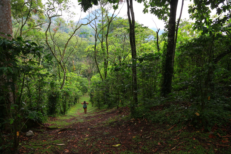 Hiking at the finca up a hill surrounded by coffee.