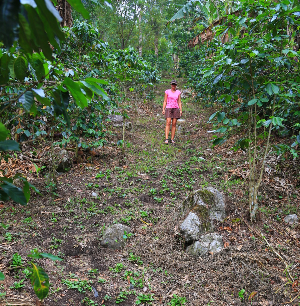 "We figured out our ""trail"" was really just walking paths through banana plantations. It was a good way to work off all the D&D beer."