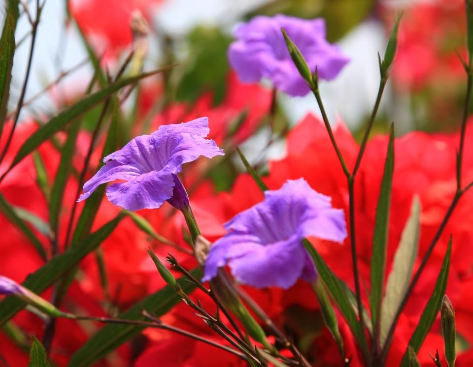 Finca flowers.