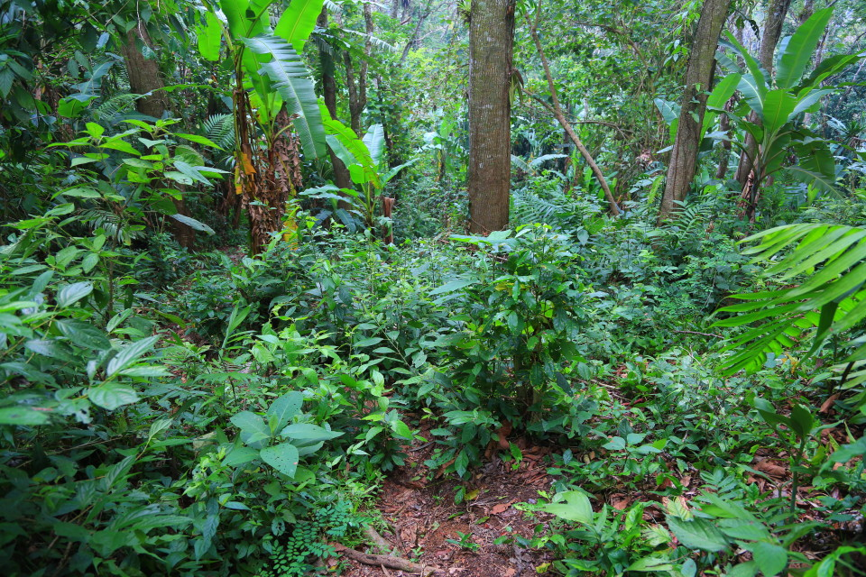 "This is our hiking ""trail"". I remember not too long ago in Belize when I swore off jungle hikes, I have a short memory."