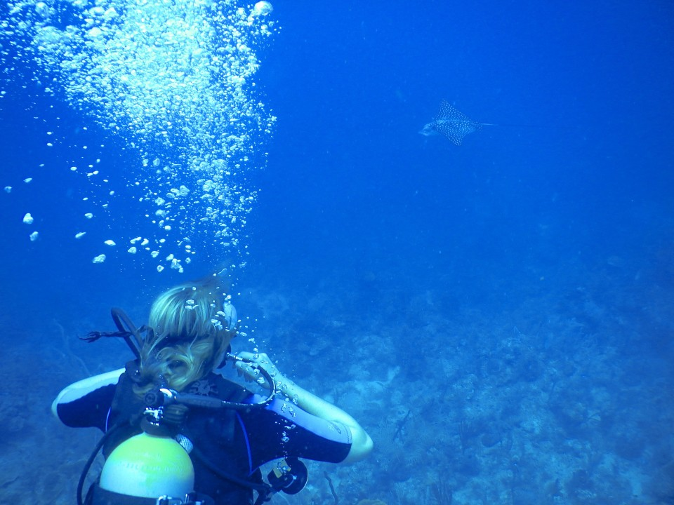 Me looking at an eagle ray swimming by. They were much larger than I expected.