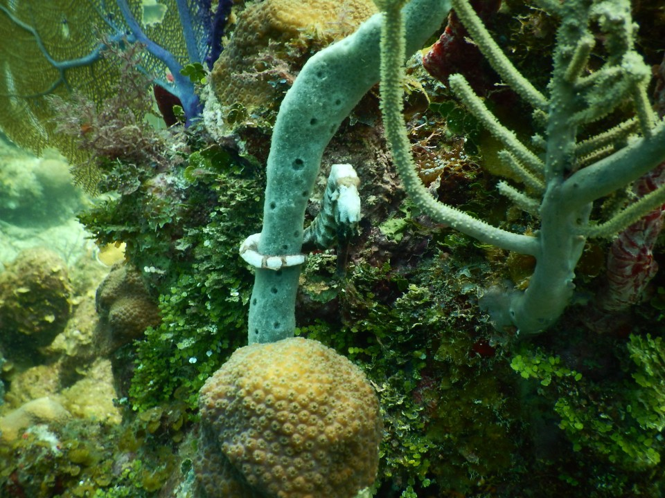 Look for the white sea horse wrapped around the coral.