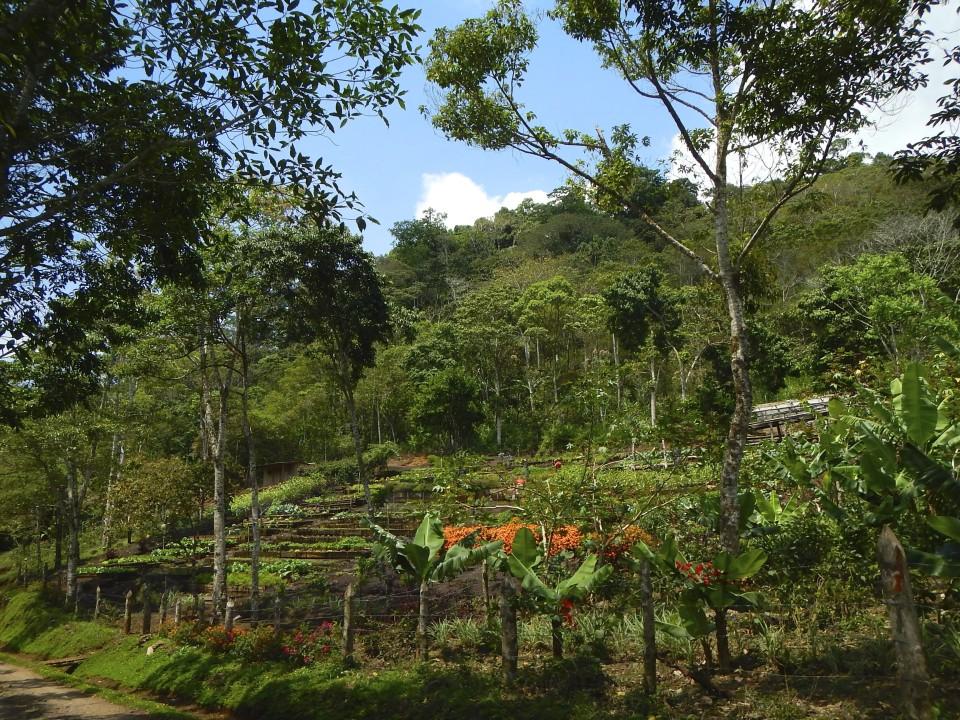The terraced organic garden of the finca.