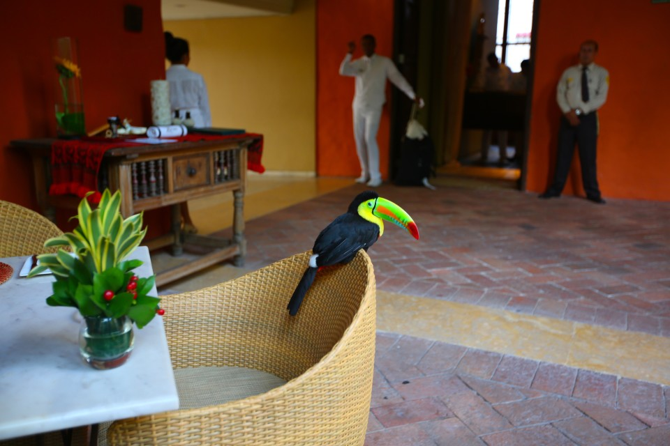 We went to the Sofitel on day for drinks because I had read the it was the favorite haunt of Gabriel Garcia Marquez who died this year. We made a toast to him and got to know Mateo the hotels pet toucan who will actually fly over and drink from your cocktail!