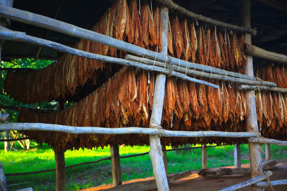 There were a ton of tobacco farms in the region. this is the tobacco drying.
