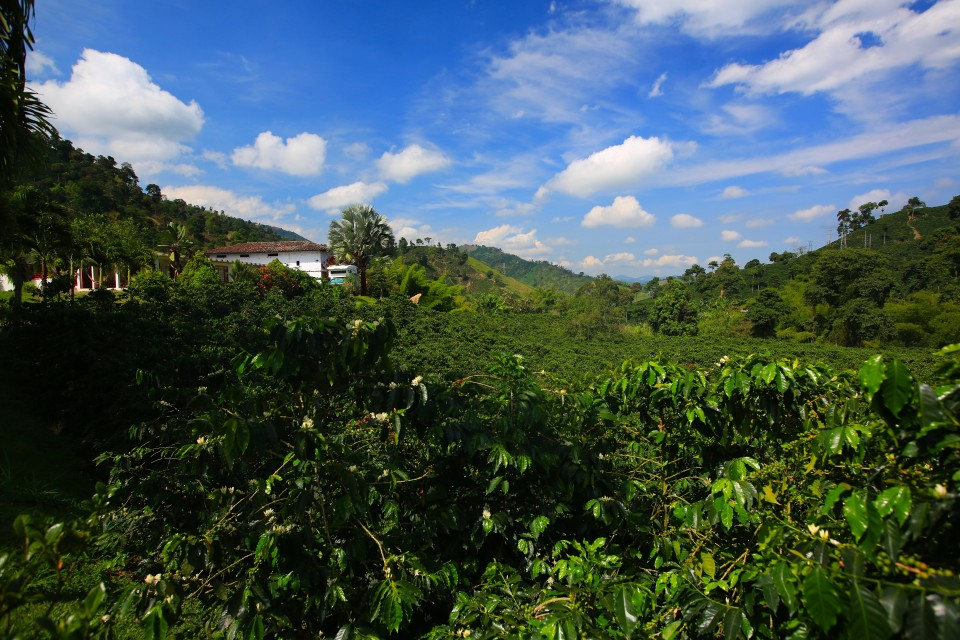 We camped at a beautiful coffee finca surrounded by coffee plants and endless free espressos. Heaven.