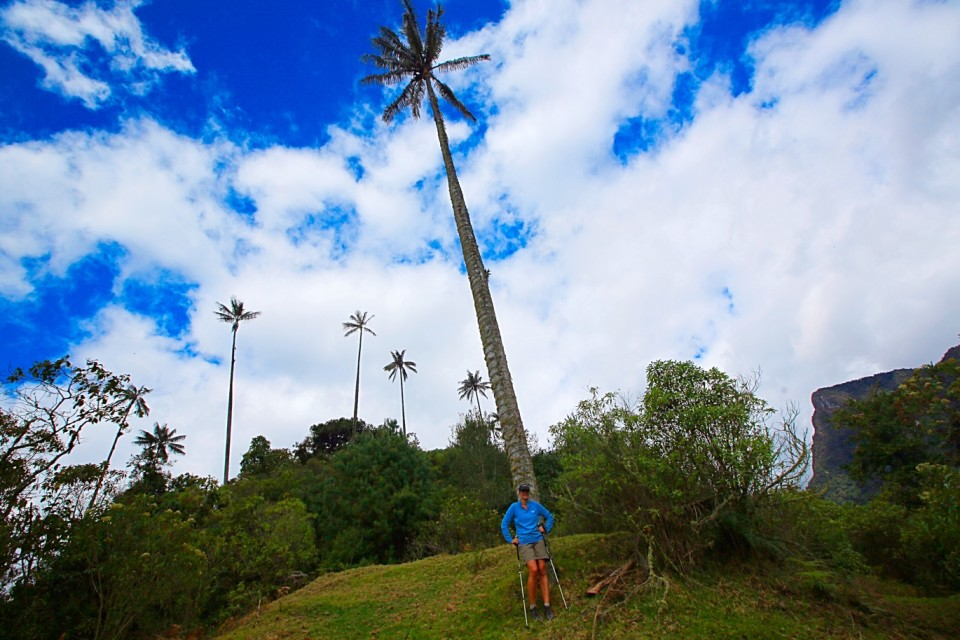It takes hundreds of years for the wax palms to grow.