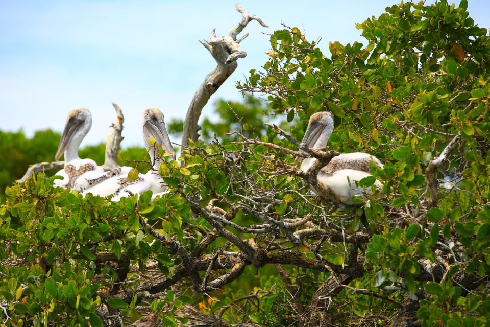 Our boat captain took us by an area where pelicans nest. these are baby pelicans!