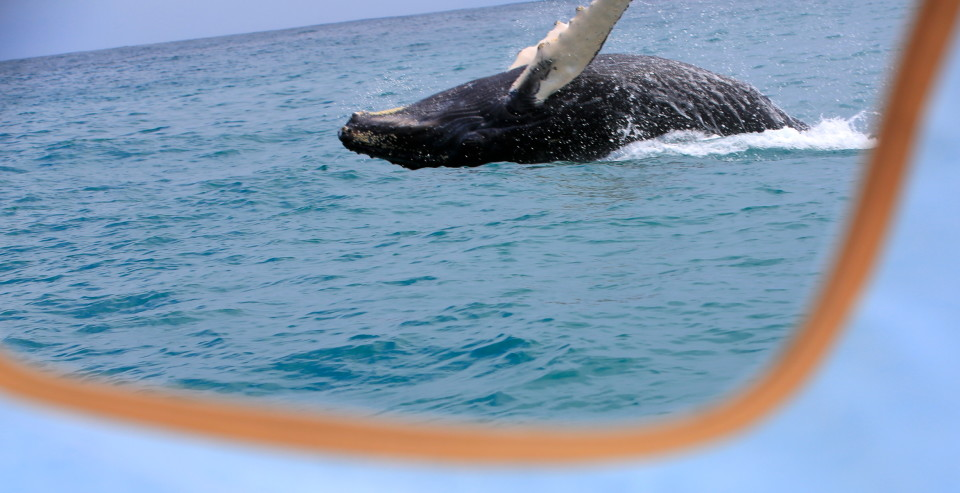Oh, and we saw humpback whales again. Sam took this through the little window on the boat. Crazy!