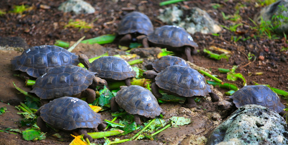 Made us all so happy to see the future will have these giant tortoises in them.