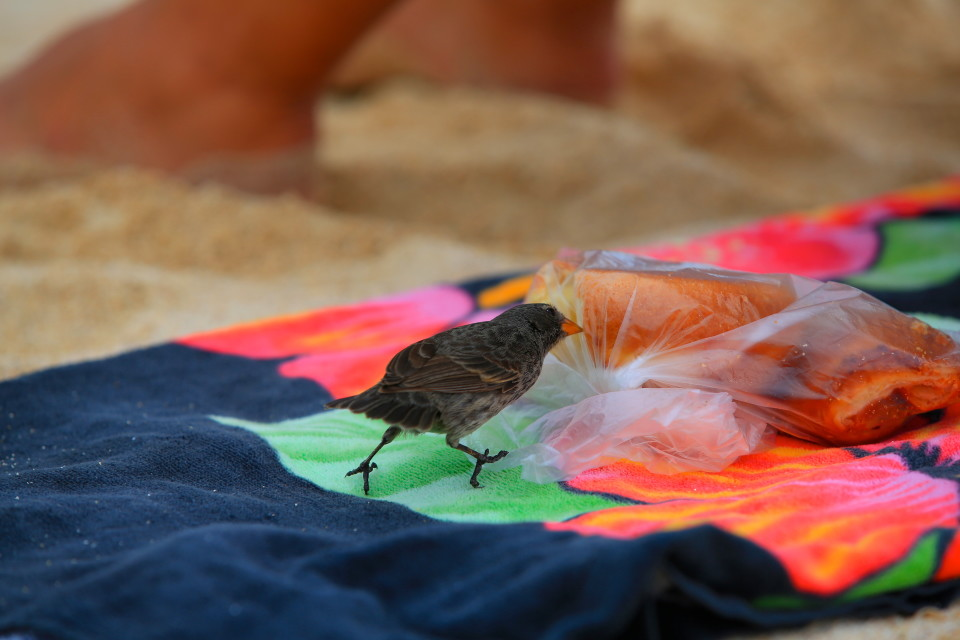 Those pesky finches! The ones on the beaches where tourists go are very brave.
