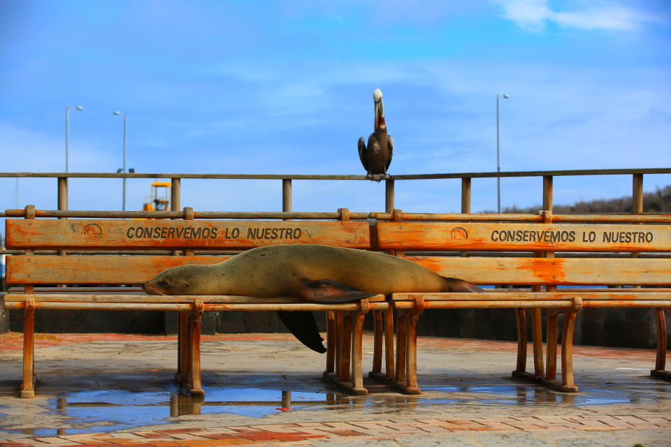 The local welcoming committee at the dock of San Cristobal.