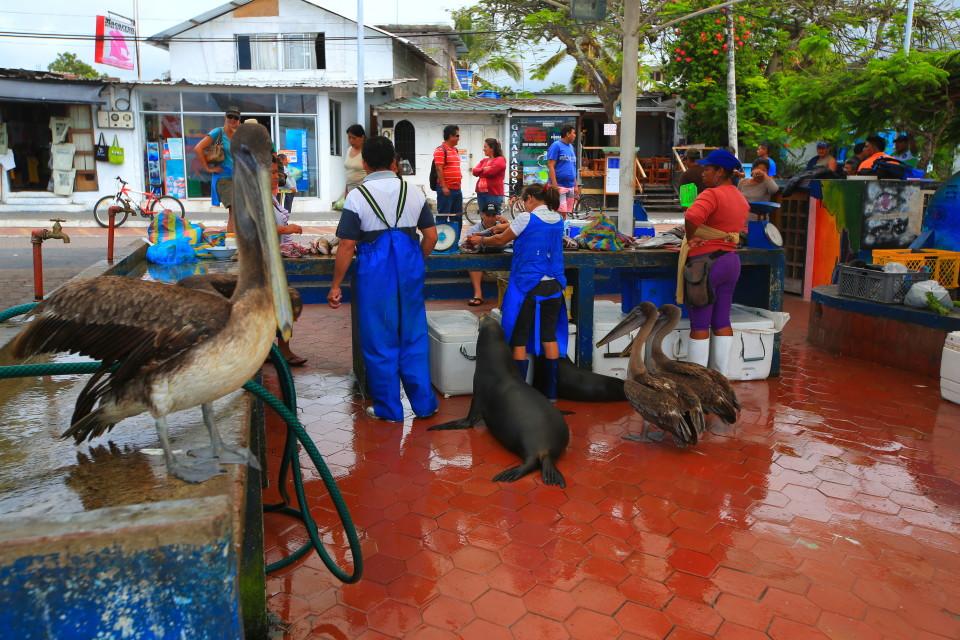 Everyone gets fed at the fish market in Santa Cruz.