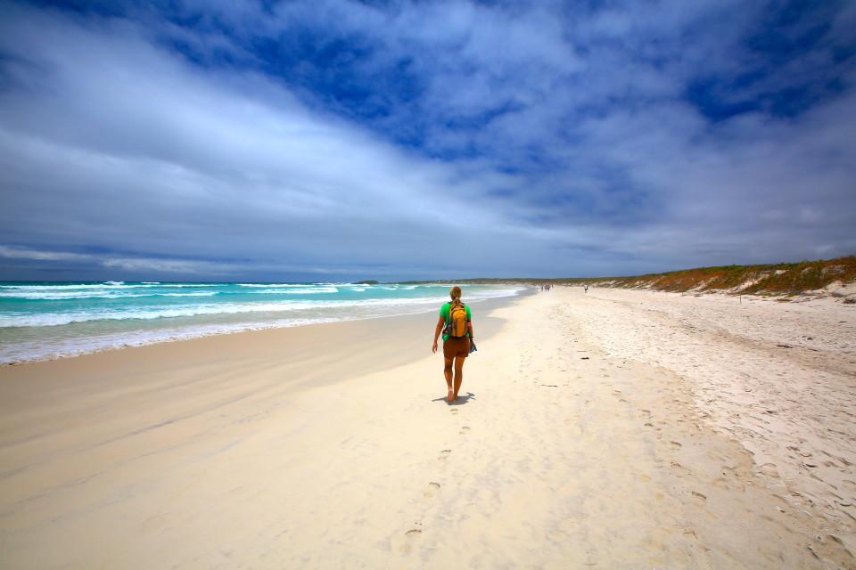 The long white sand beach of Tortuga Bay.