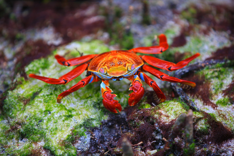 Ok, the last crab picture, I promise.