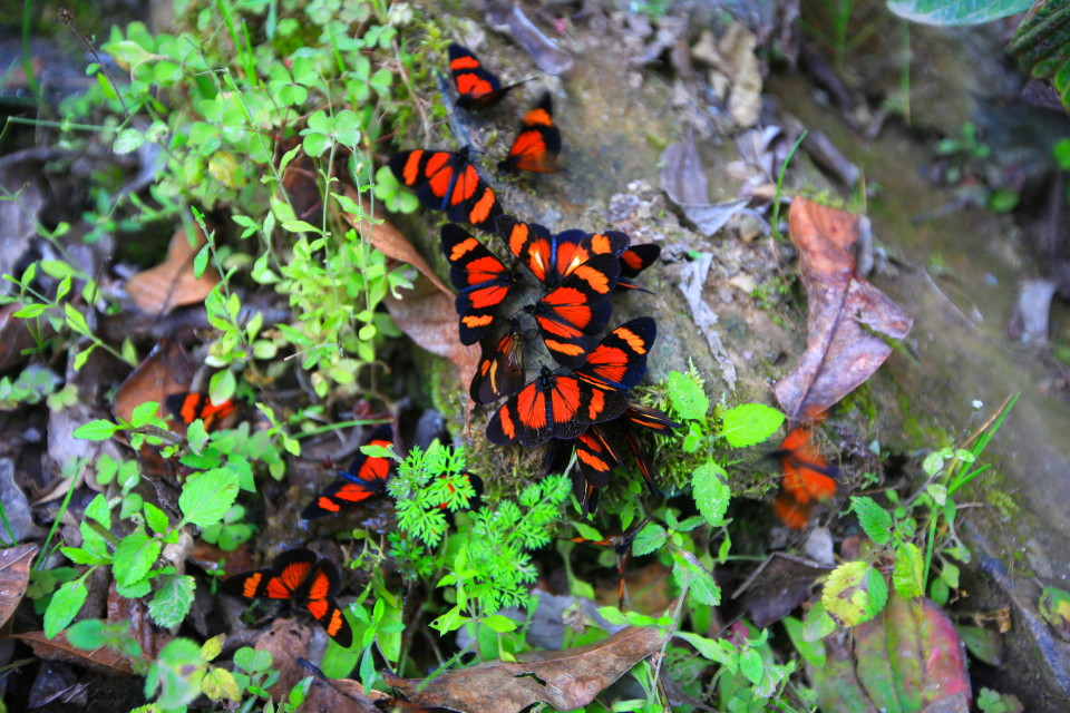 These butterflies were all over everything. There is something magical about walking through hundreds of colorful butterflies.