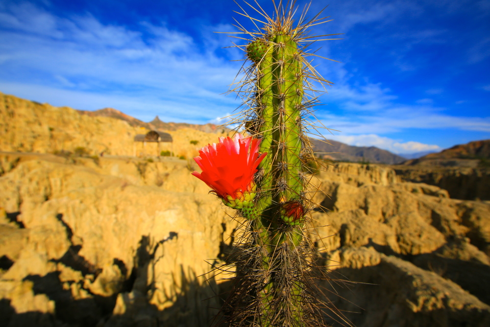 The cacti were in bloom when we visited the area and made for some stark contrasts against all the rocks.
