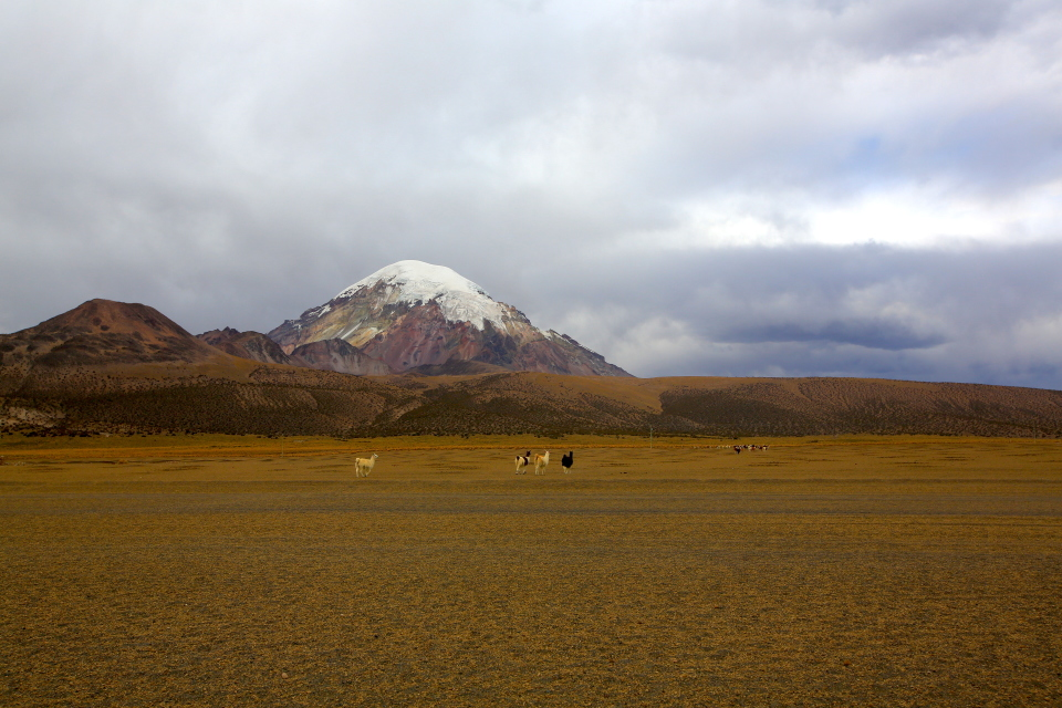 Our first views of the Sajama volcano with alpacas roaming around the base. The peak looks fairly close.