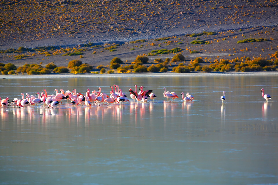 These flamingos stayed in the lake all night.  In the morning, the lake was partially frozen and the flamingos were all huddled together.
