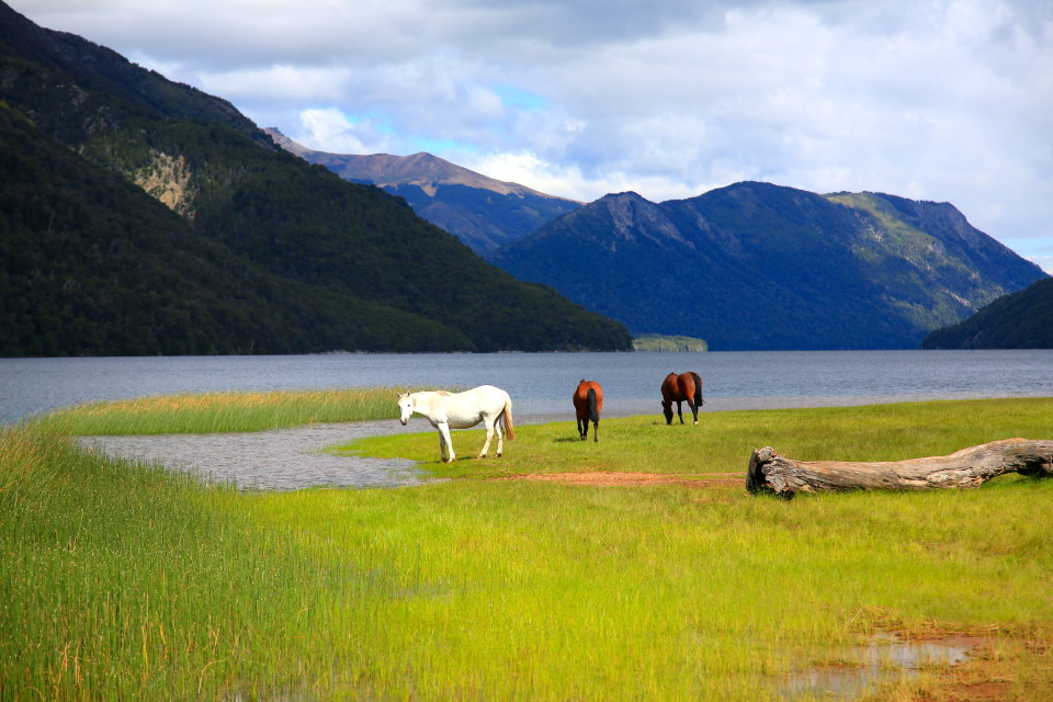 Our campsite was full of sturdy Patagonia horses. We literally shared our camping space with them for three days.