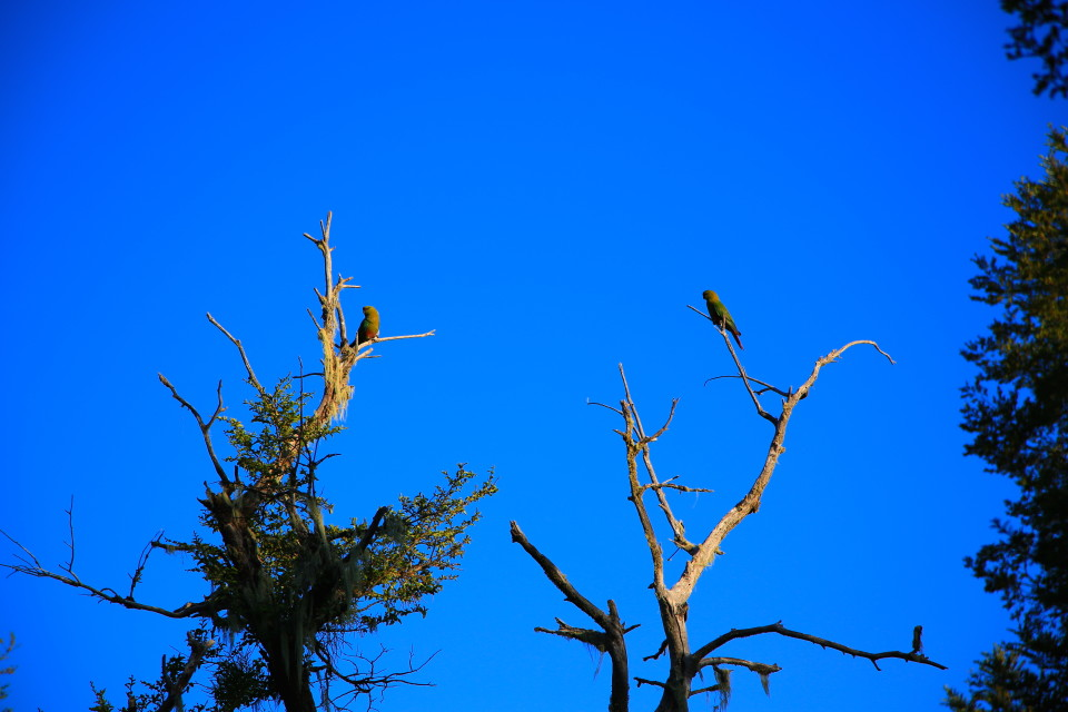 There were giant parrots that lived in the tree above our camper. I always thought of parrots as tropical birds for some reason, but here they were in Patagonia.