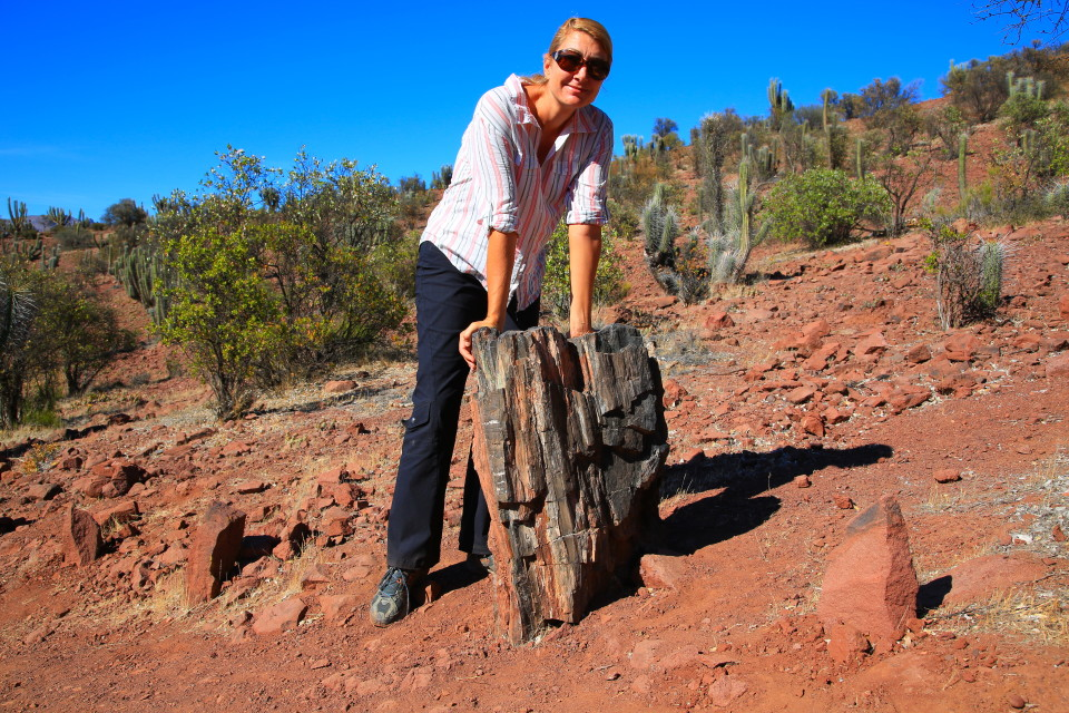 And this was about if for petrified wood. Hmmm....
